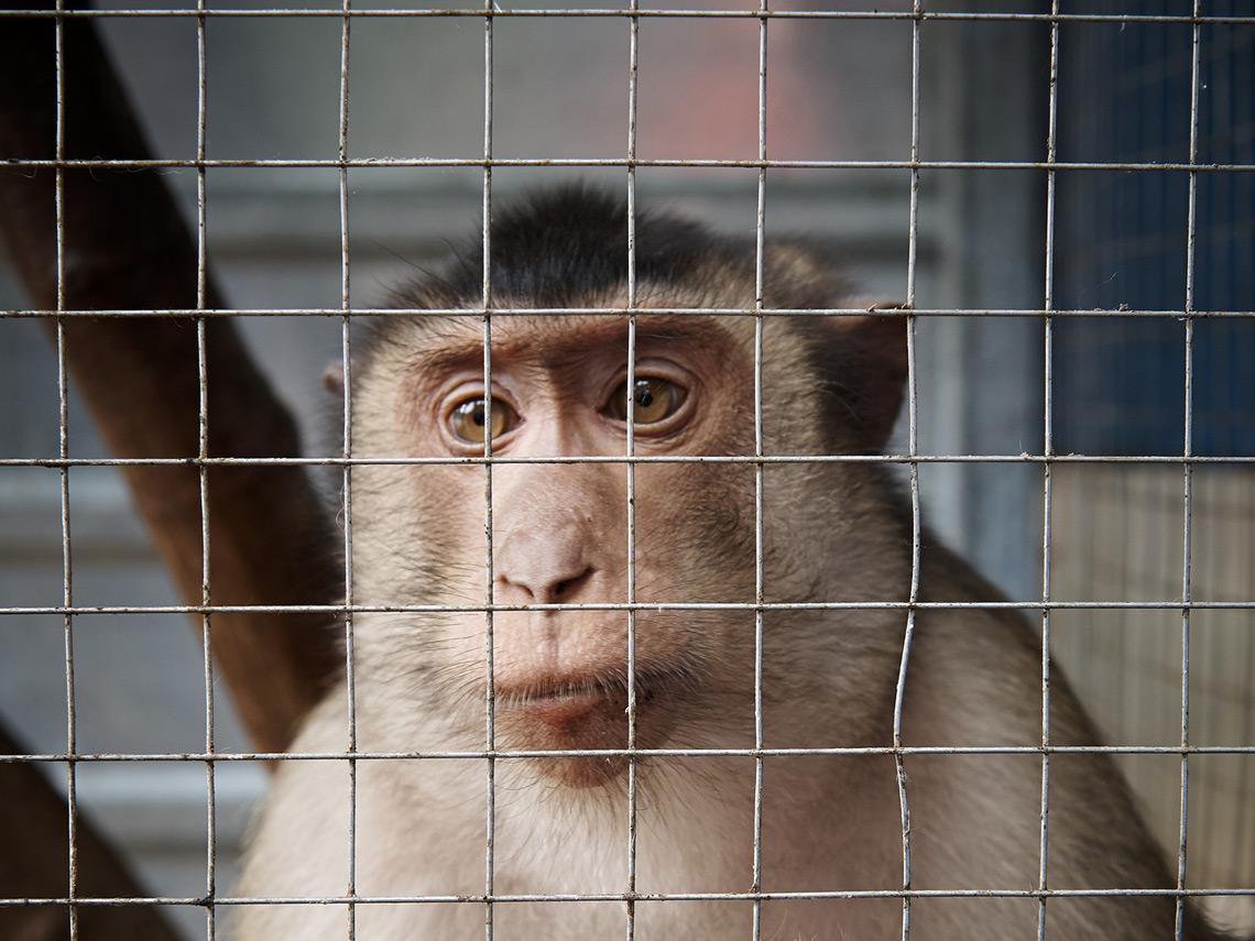 Mono dentro de una jaula