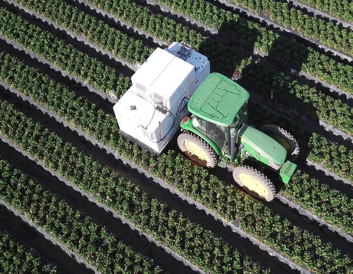 Tractor recogiendo fresas