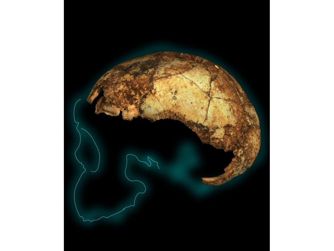 homo-erectus2