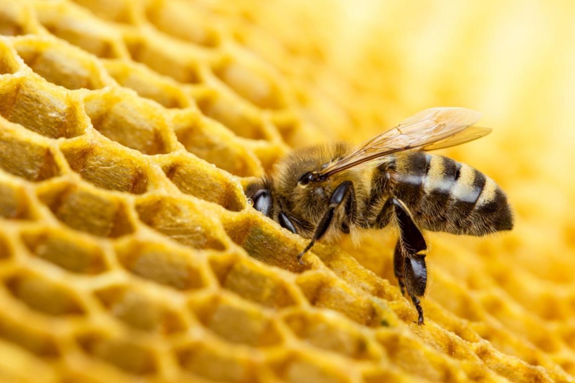 abeja-mitad