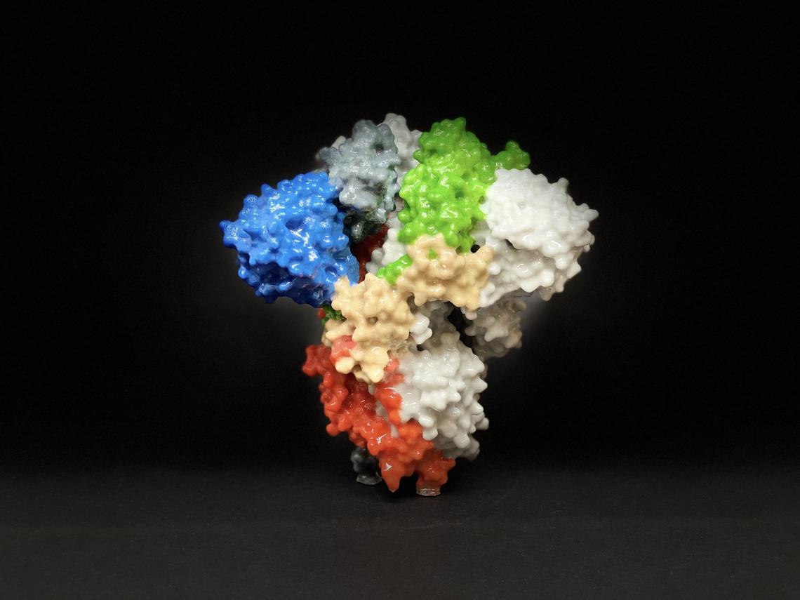 Impresión 3D de una proteína en espiga en la superficie del SARS-CoV-2, el virus que causa la COVID-19. /NIH