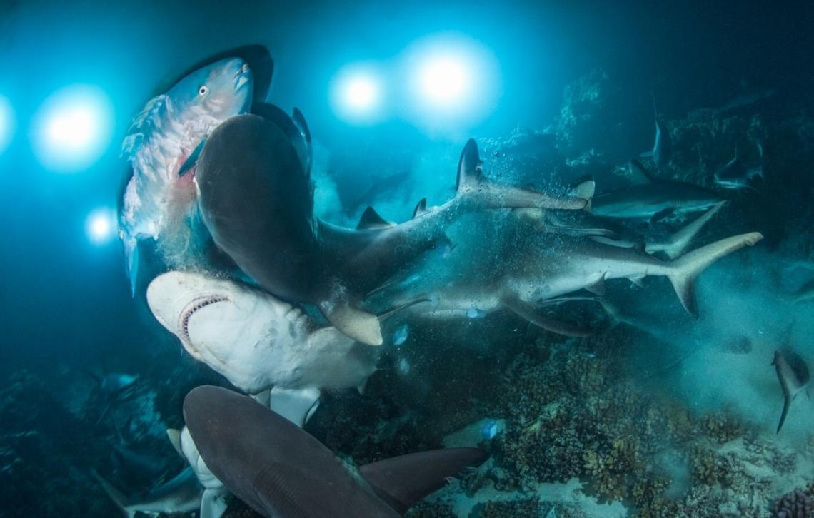 galeria-underwater