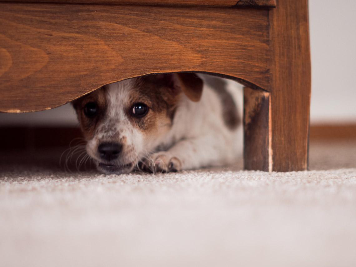 dog under a wardrobe