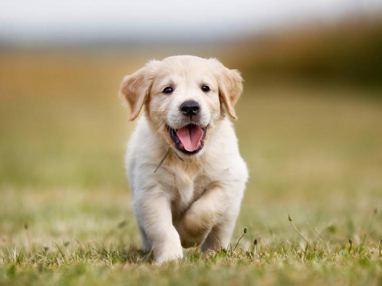25 dog names inspired by mythology