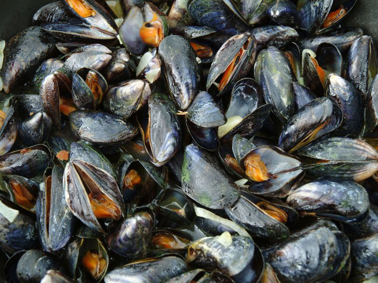Which fish and shellfish accumulate the most toxic metals?