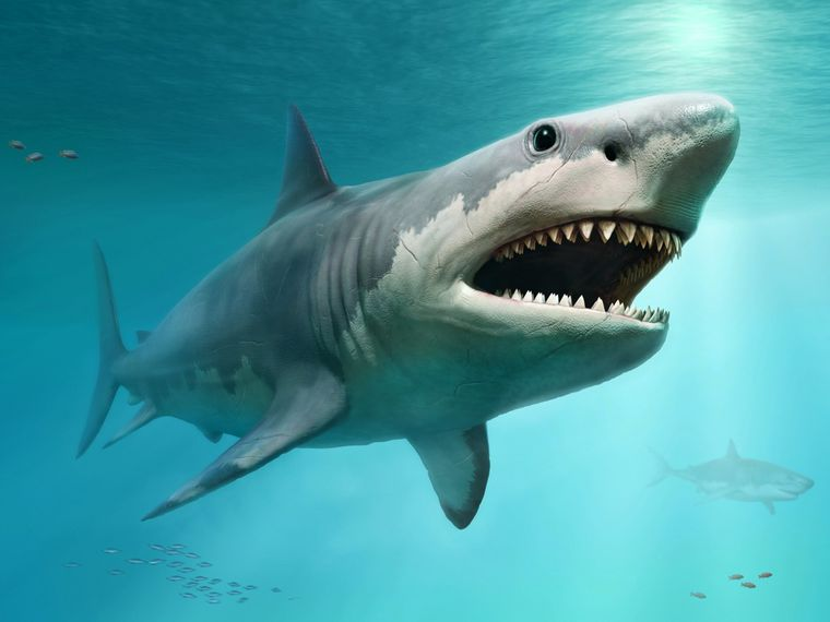 Prehistoric sharks, the kings of the sea